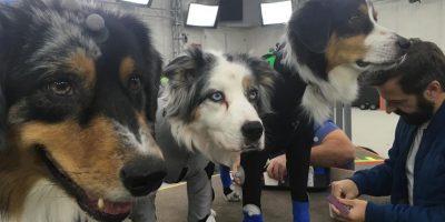 The Last of Us Part II – eszméletlen cukik a kutyák felvétel közben